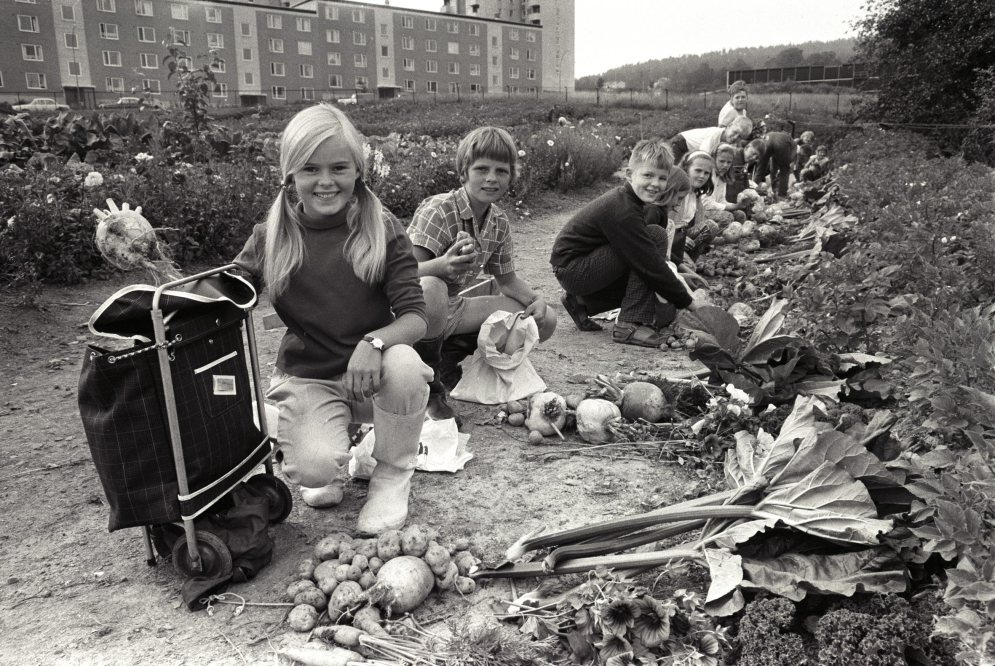 Brobekk skolehage deles av Nordtvet, Veitvet, Tonsenhagen og Linderud skoler. august 1967